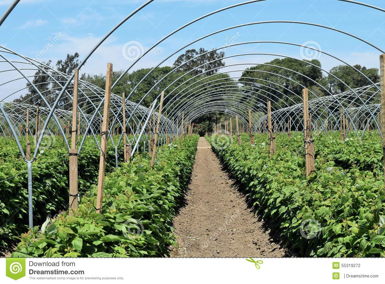 Patterns Of Greenhouse Arches Stock Photo - Image of metal