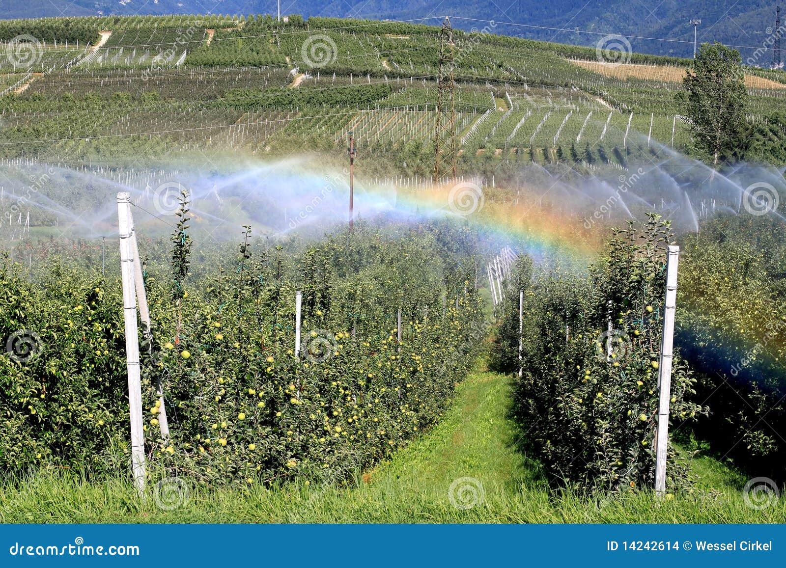 Arco-íris pela irrigação de um pomar de maçã, Italy