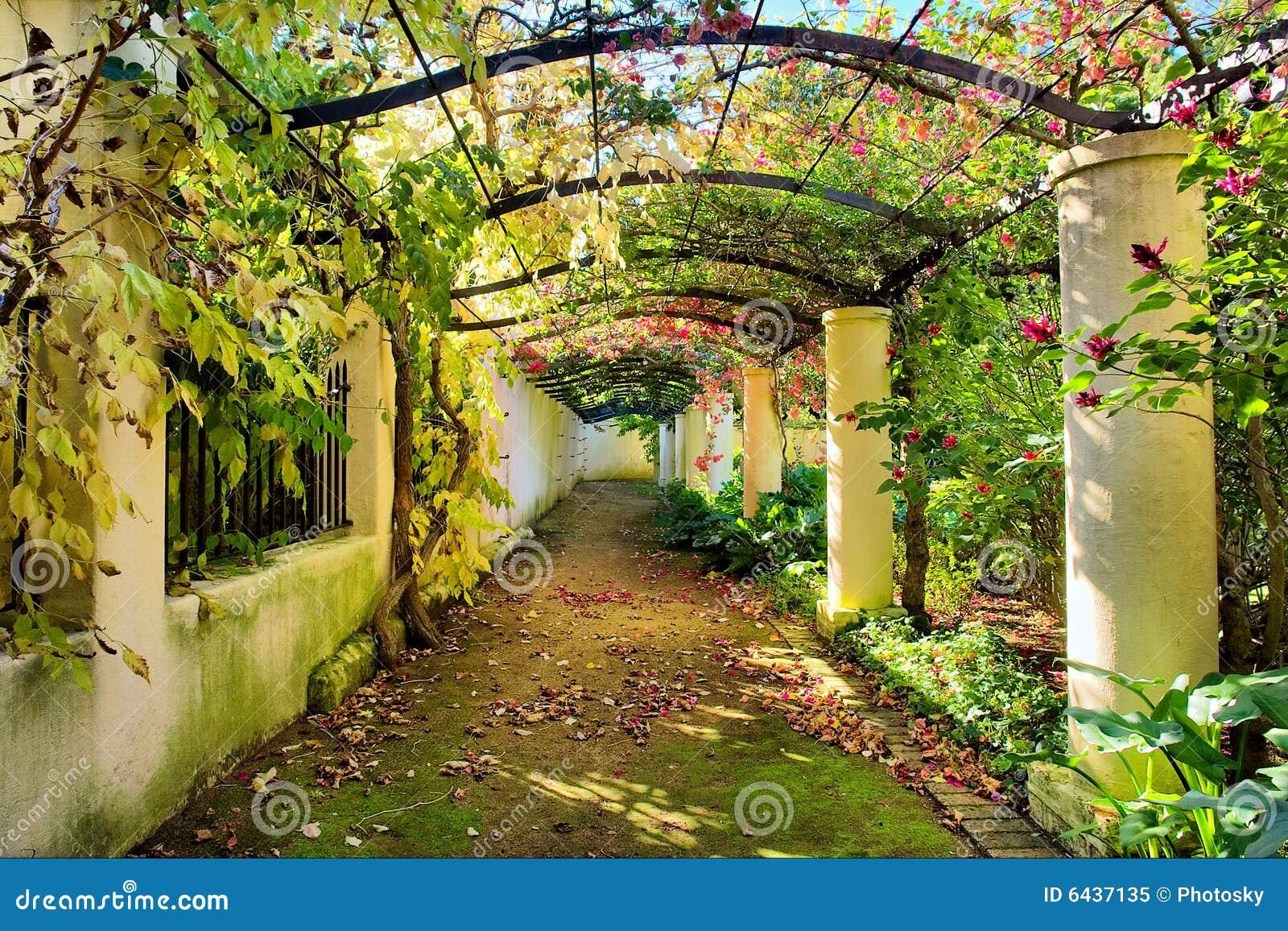 Arco d autunno coperto dalla vite