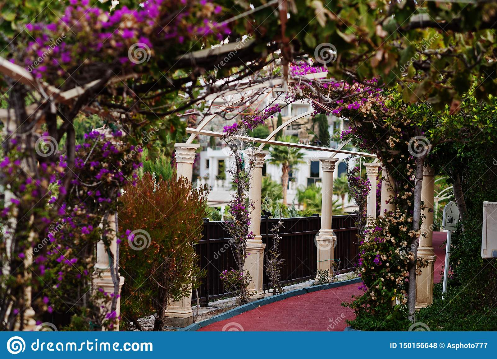 Arco de flores roxas da buganvília no recurso de Turquia