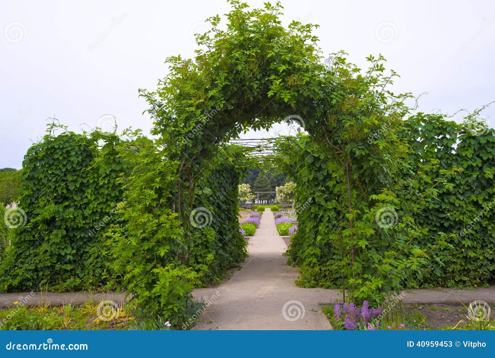Arco naturale verde delle piante rampicanti fotografia for Piante rampicanti