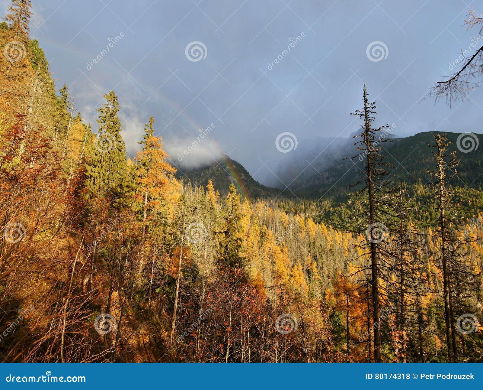 Arcobaleno e colori di autunno della foresta fotografia - Arcobaleno a colori e stampa ...