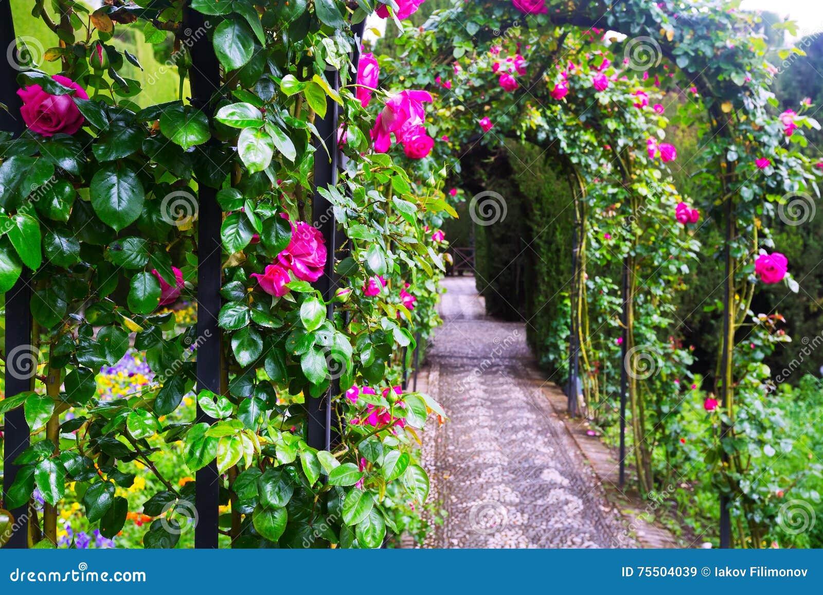 Arcos Con Las Rosas En El Jardin De Generalife Granada Imagen De - Arcos-de-jardin