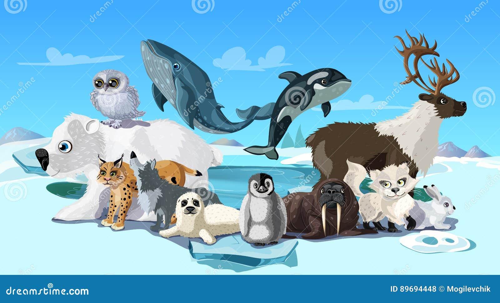 Arctic Animals Cartoon Template Vector Illustration