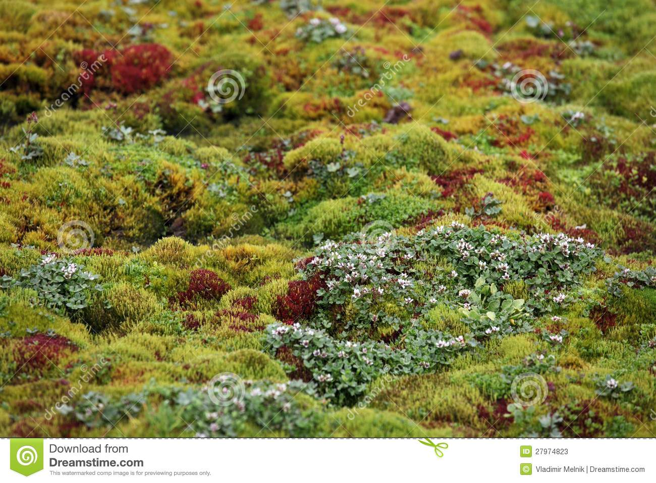 What are adaptations of caribou moss? - mccnsulting.web ...