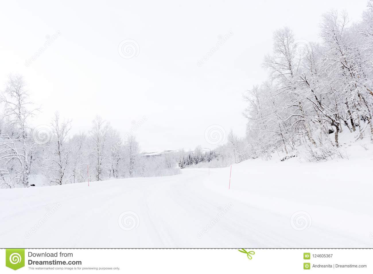 Arctic road with snowcovered forest