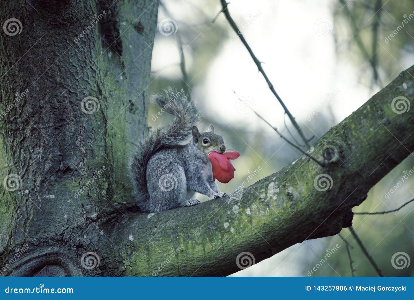 Ardilla en la rama de árbol