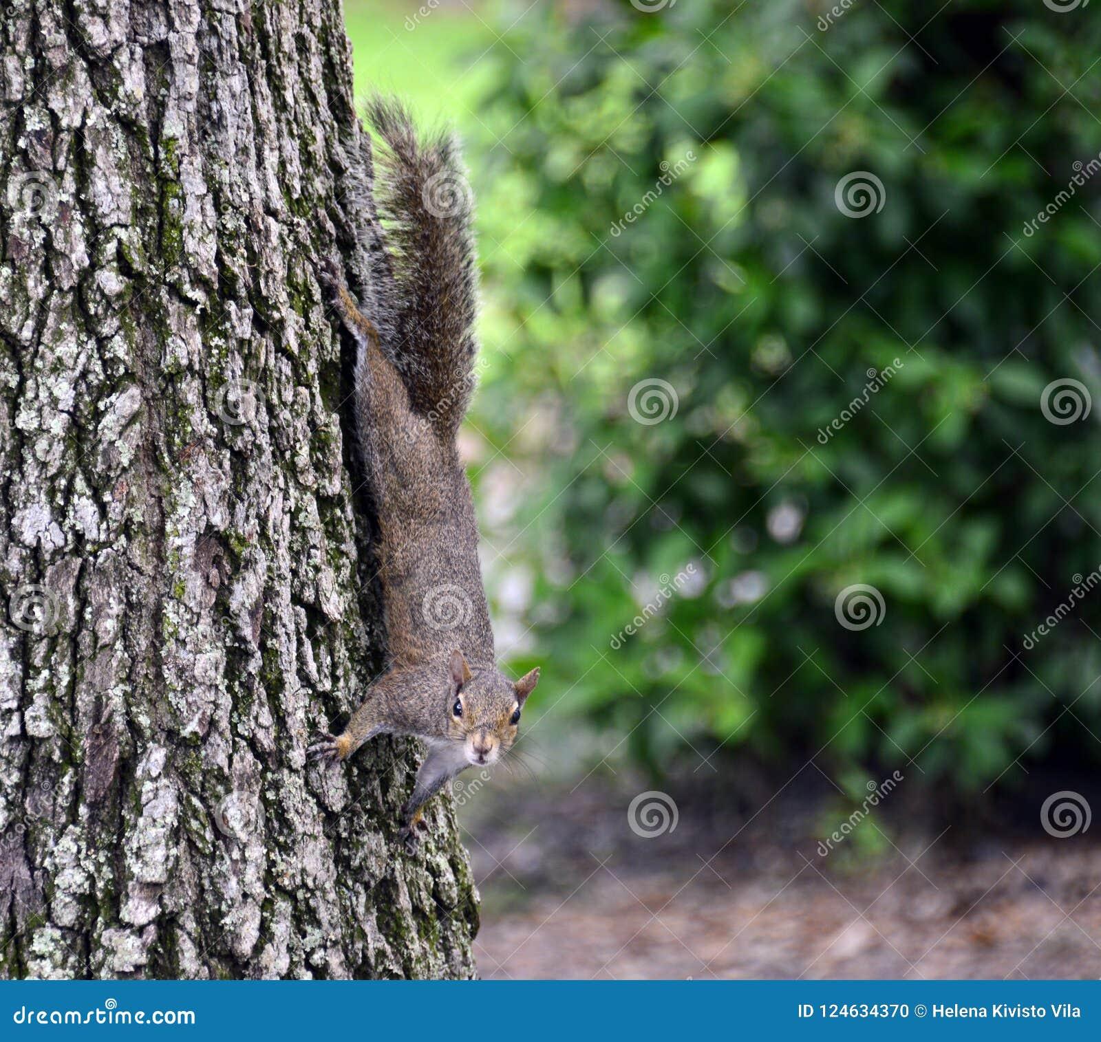 Ardilla en un tronco de árbol