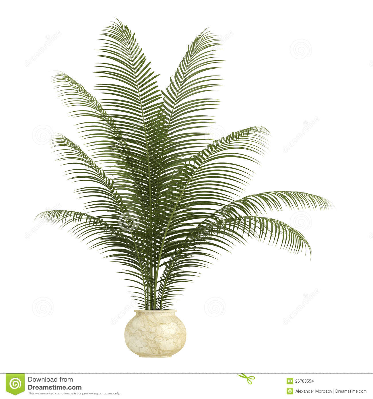 Areca Palm Houseplant Stock Illustration Image Of