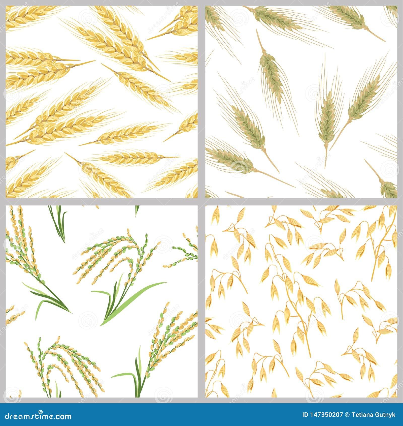 Aren van tarwe, haver, rijst en rogge Reeks naadloze patronen van korreloren
