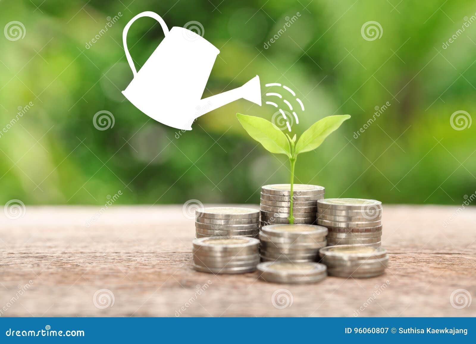 Argent et usine avec l arbre de boîte et d argent d arrosage, enregistrant l argent c