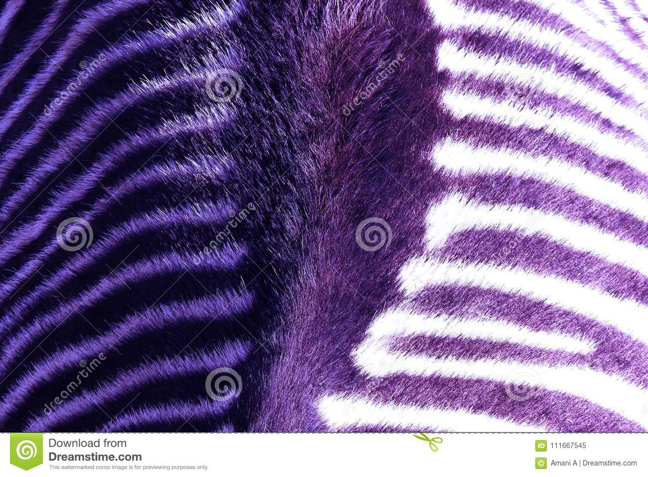 Arial close up view of a Zebra`s back