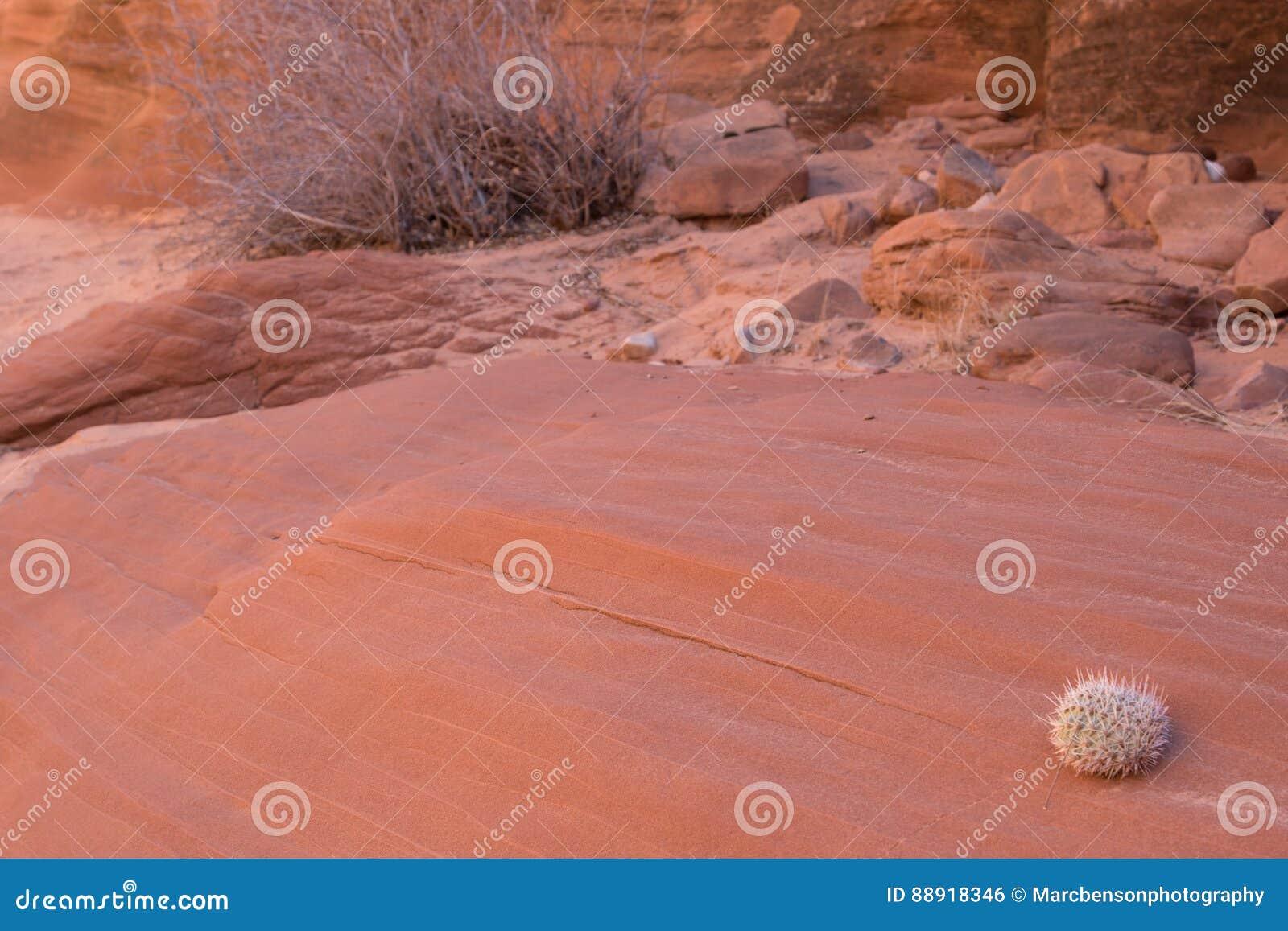 Arizona öken