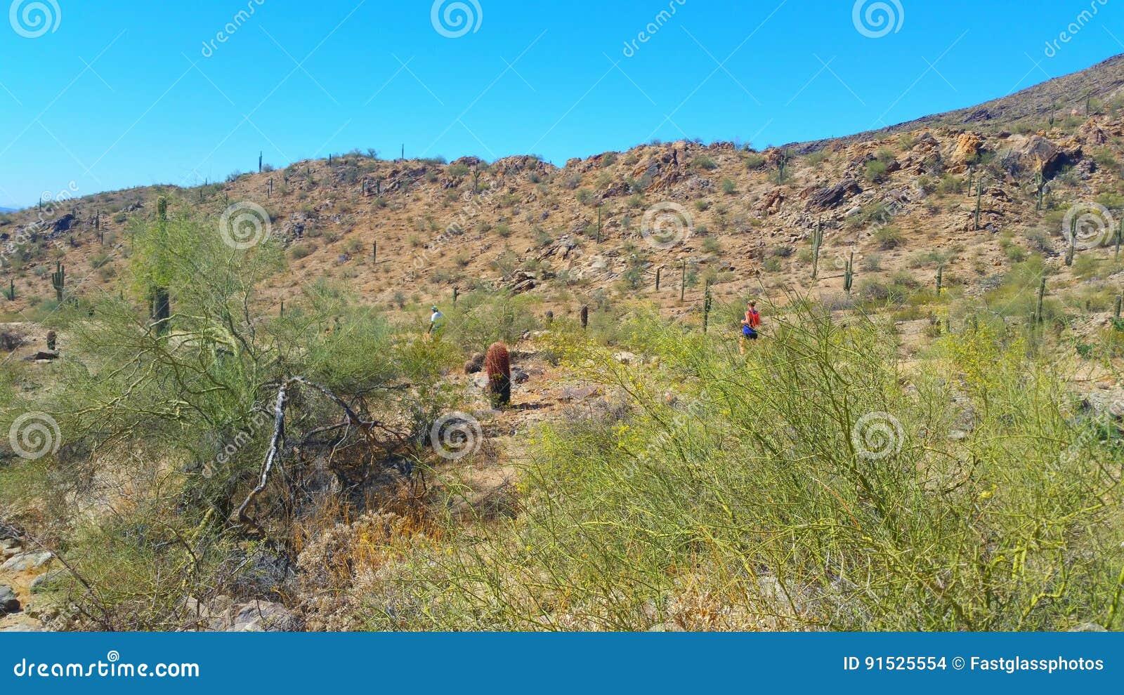Arizona-Wüsten-Landschaft