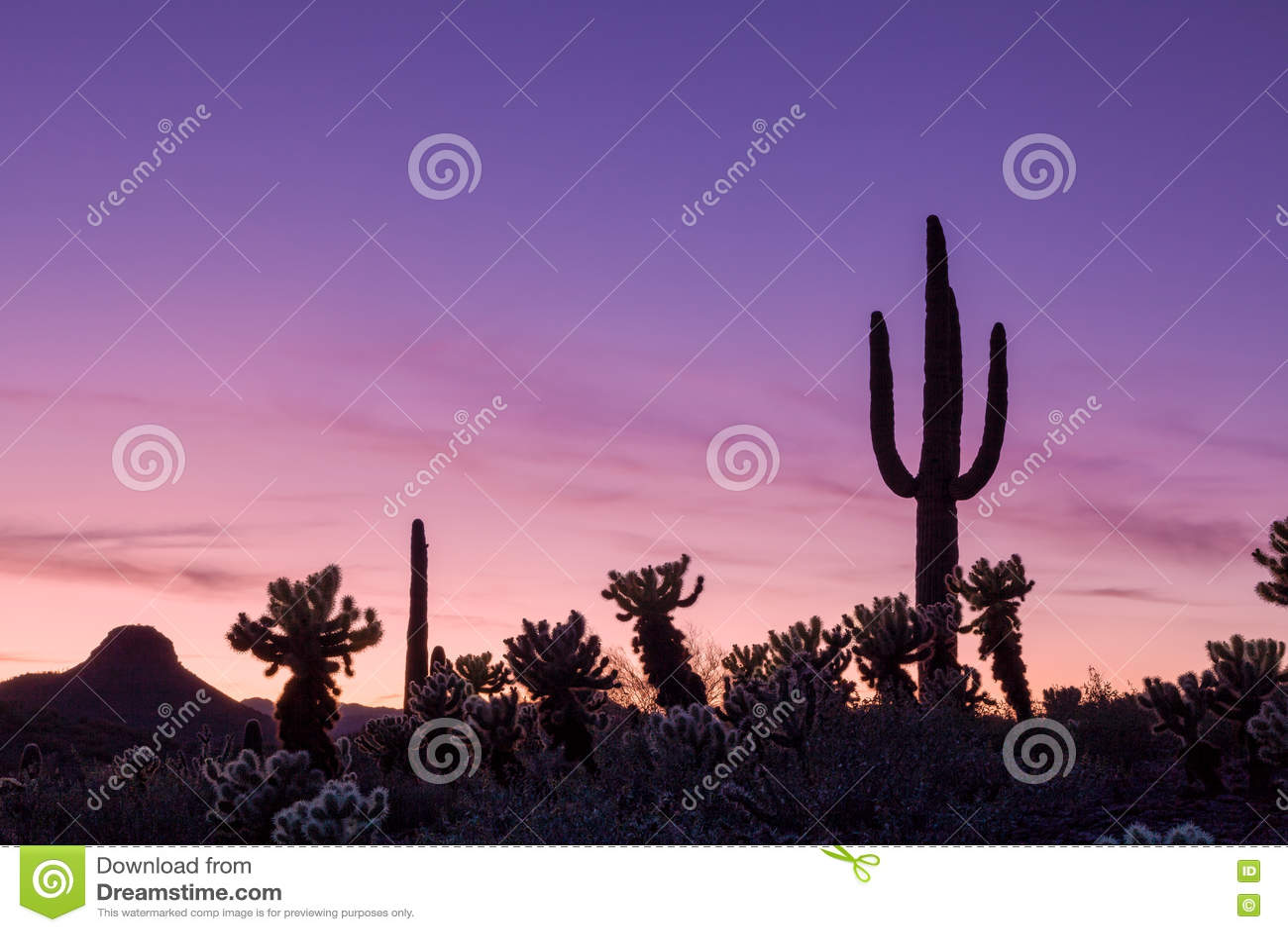 Arizona-Wüsten-Sonnenuntergang