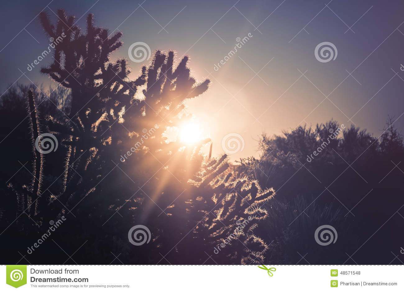 Arizona-Wüstenkaktus-Baumlandschaft