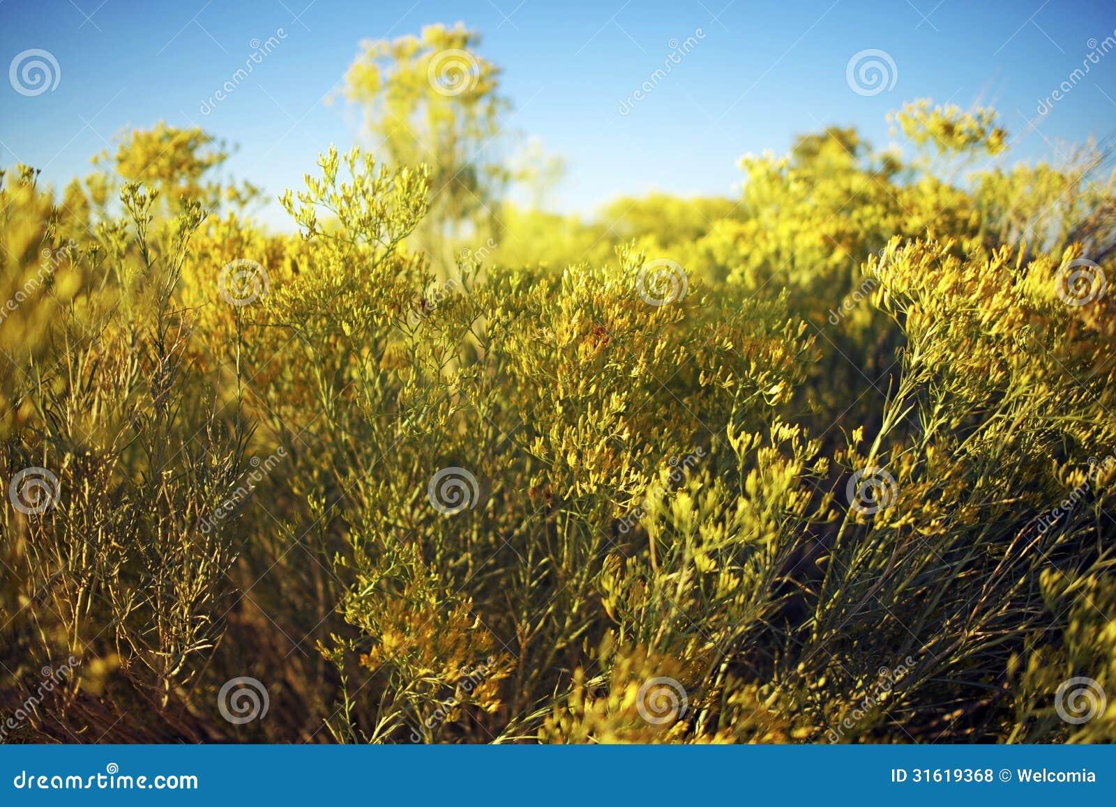 Arizona-Wildflowers