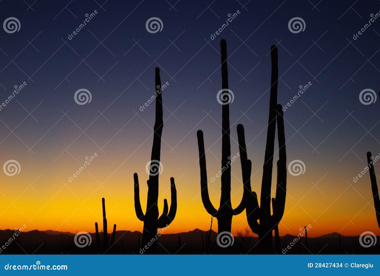 Arizona zmierzch