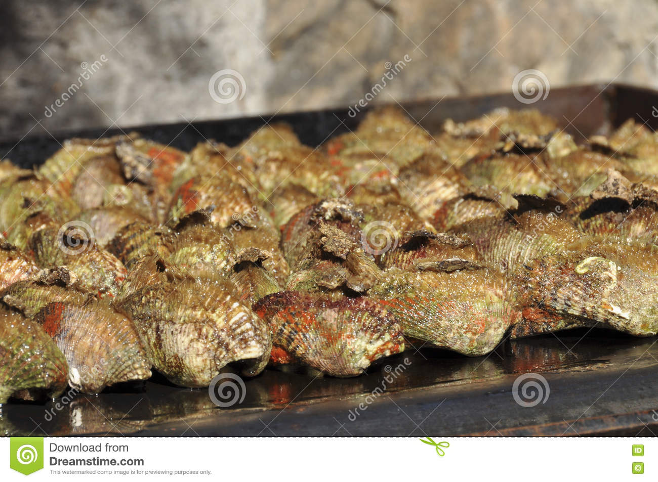 Ark clams on grill stock image  Image of delicious, marine
