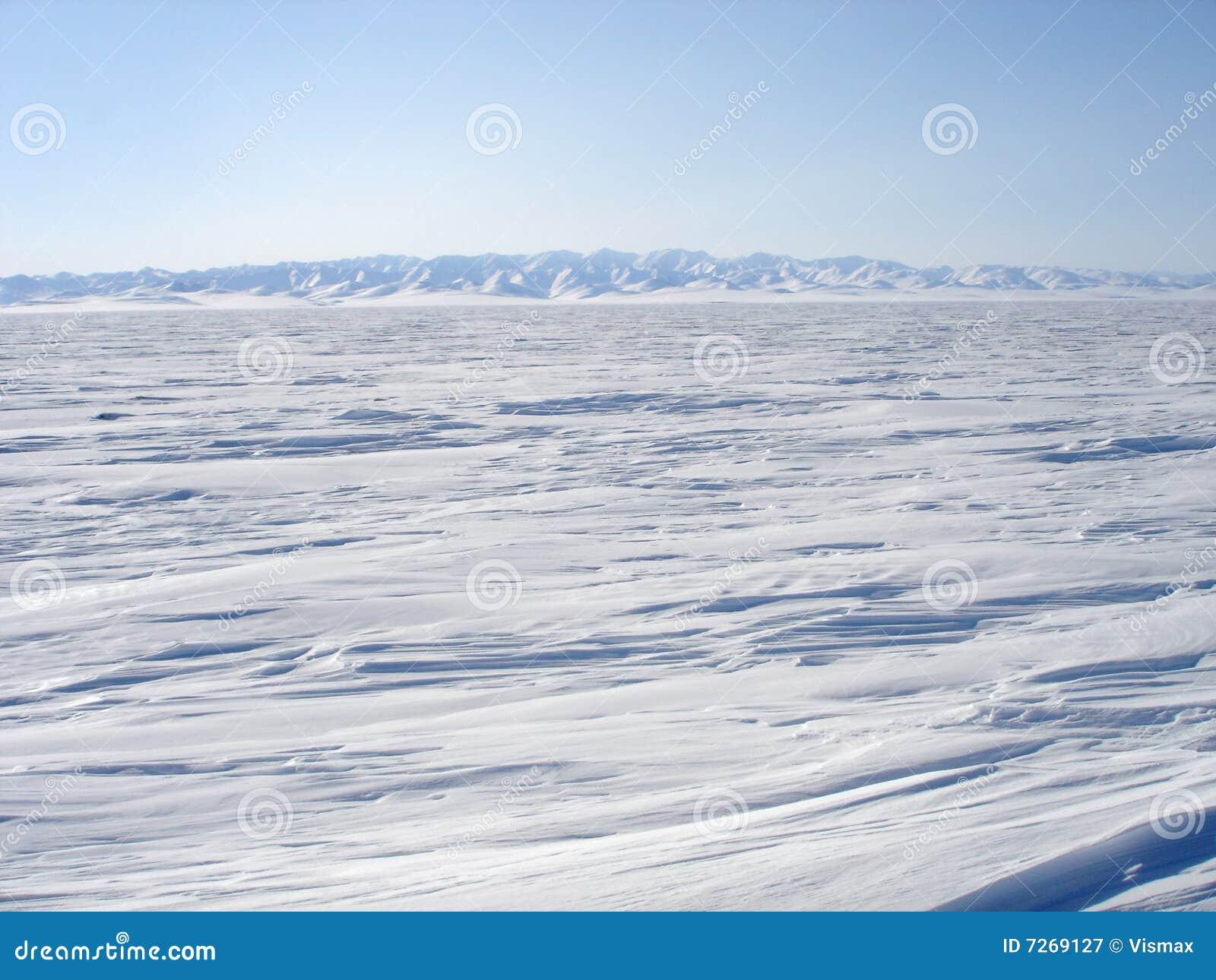 Arktisk liggande