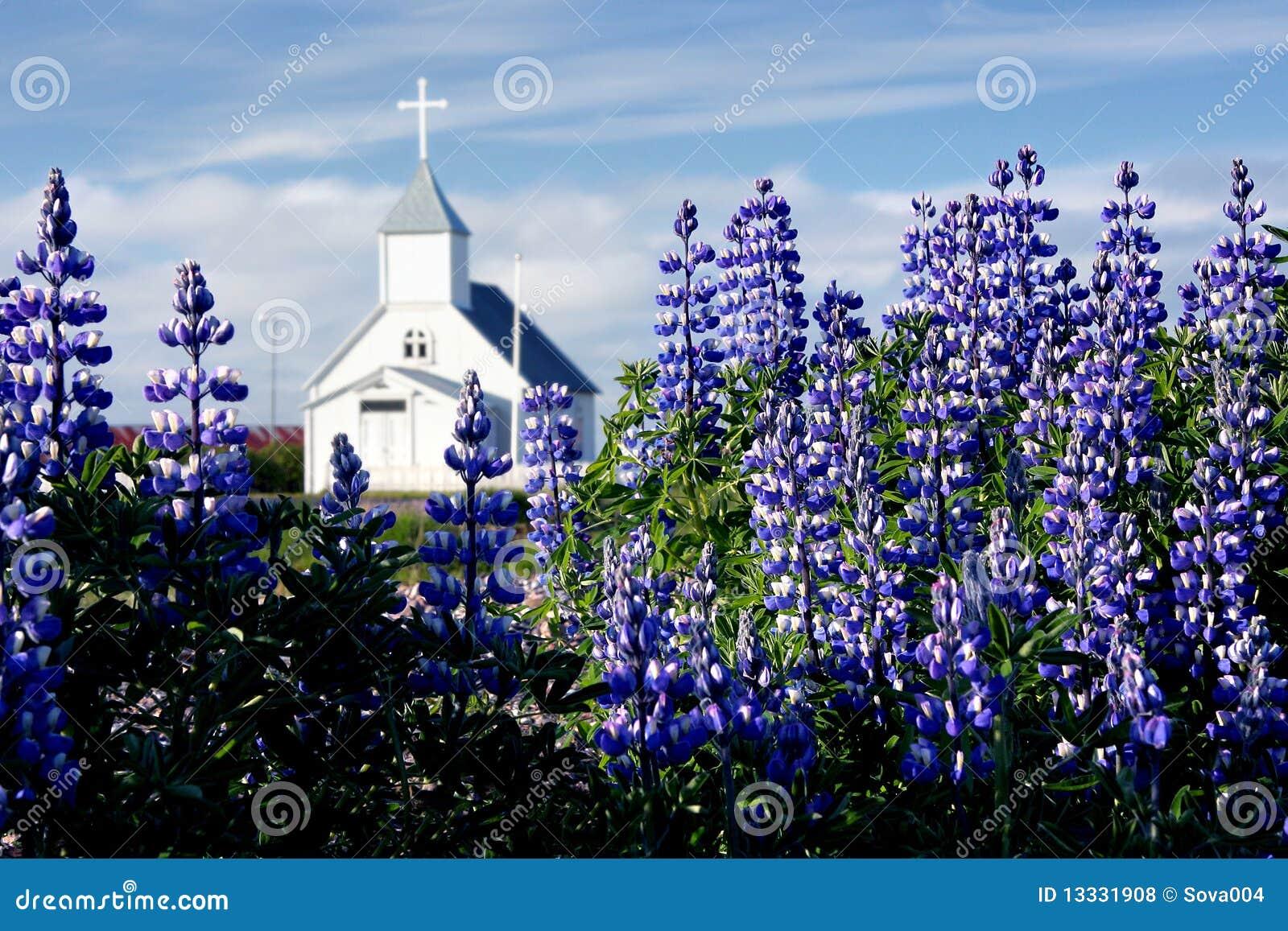 Arktyczni kościół pola fireweeds