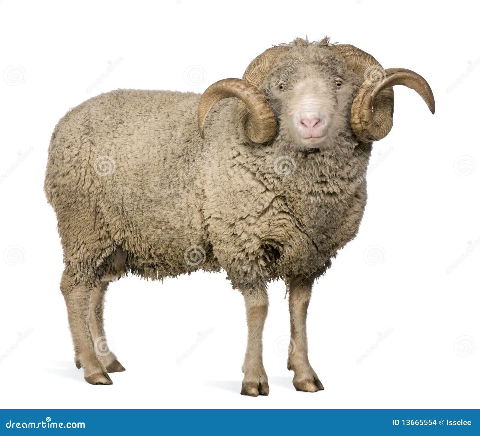 Animal farm length