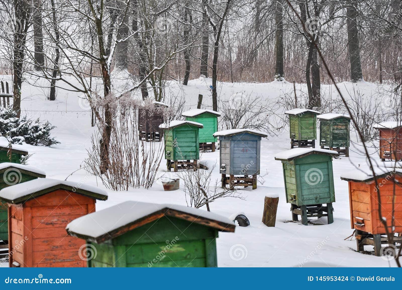 Arnia, alveari dei colori differenti nelle file, coperti in neve