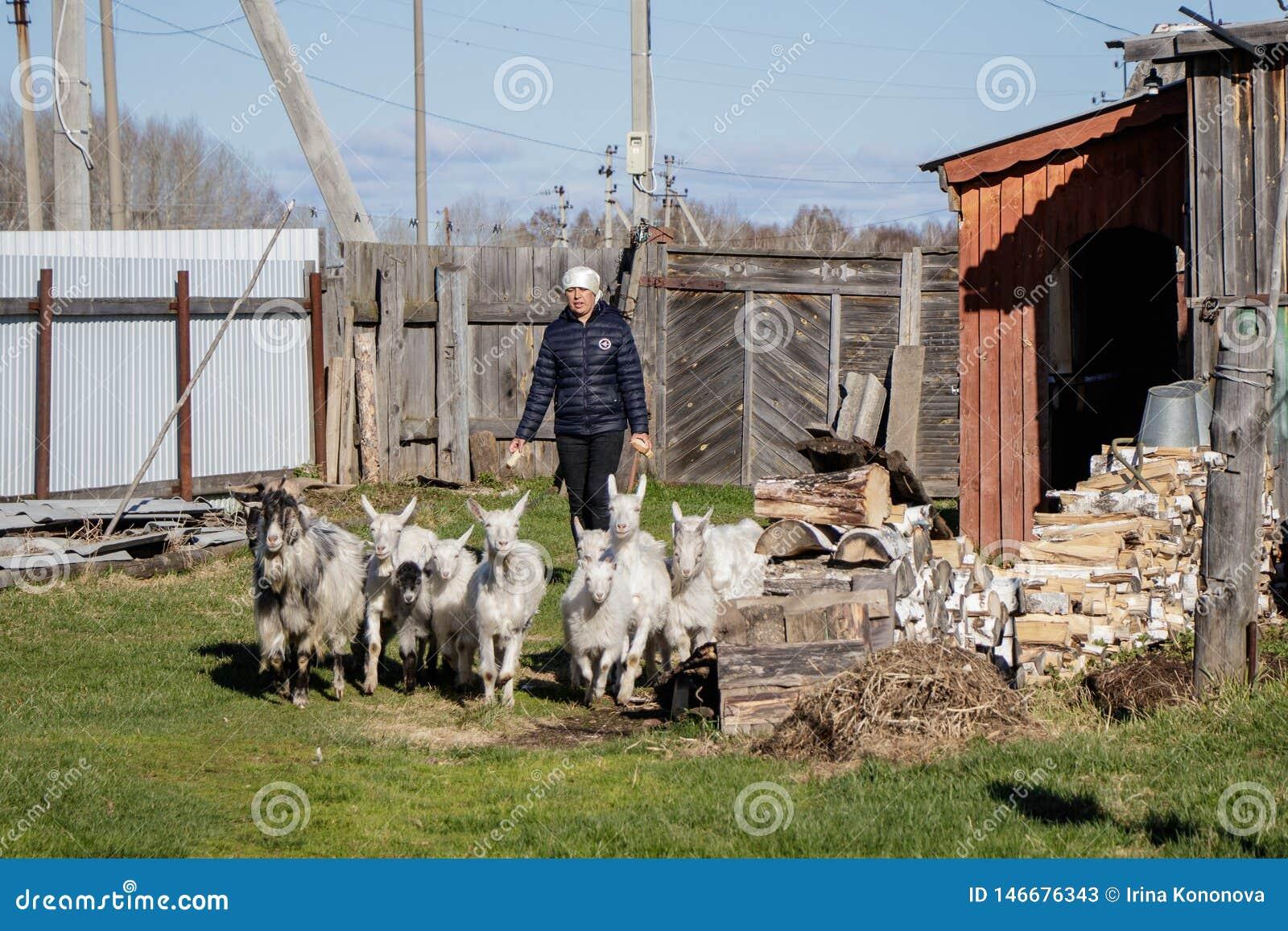 Aromashevsky俄罗斯2018年5月24日:有山羊的妇女在农庄