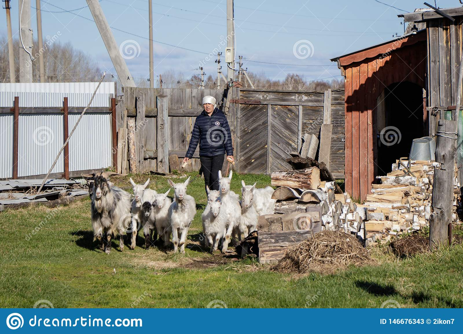 Aromashevsky Russia 24 May 2018: woman with goats on the farmstead