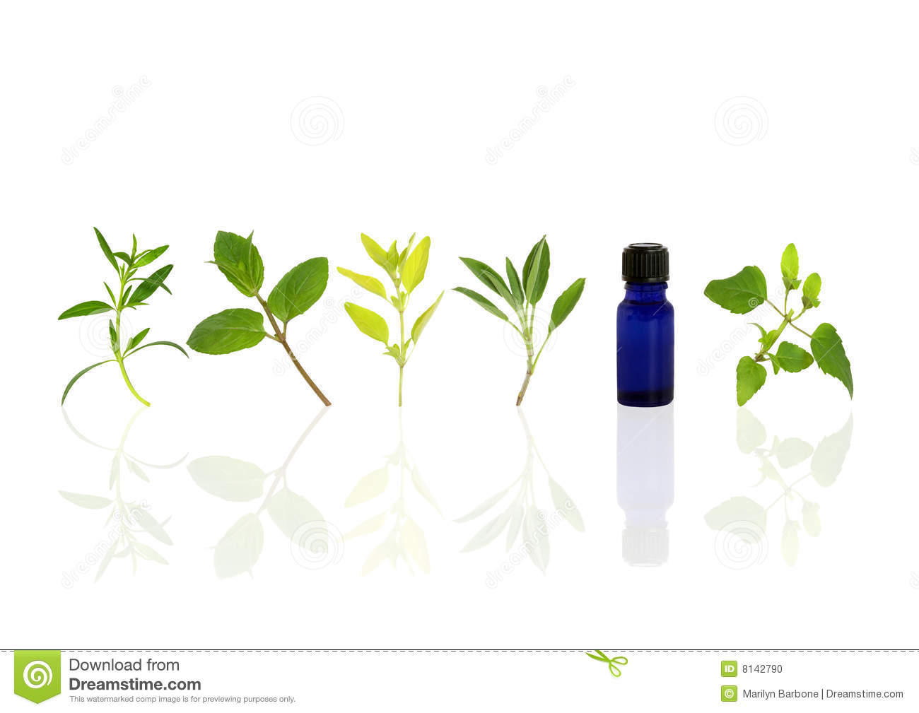 Aromatherapy Essential Oil Herbs Stock Photo Image 8142790