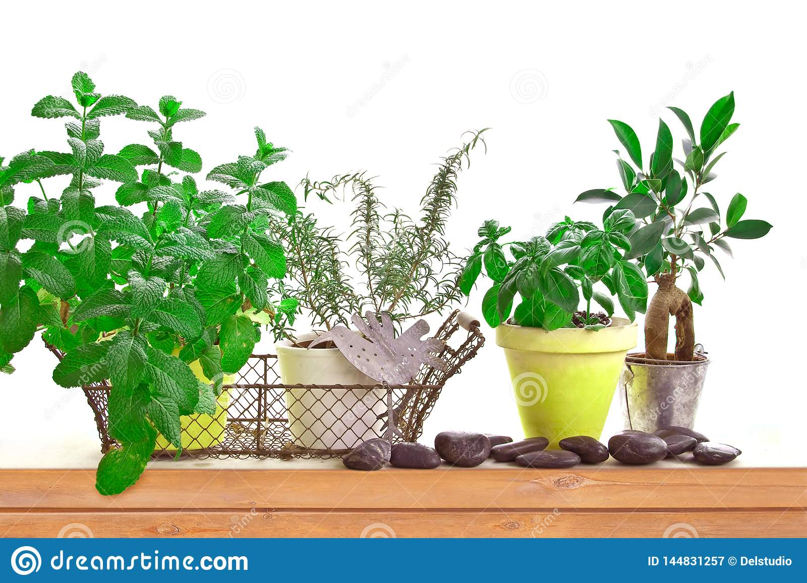Aromatic Herb Garden With Pots Of Basil And Mint On A Shelf
