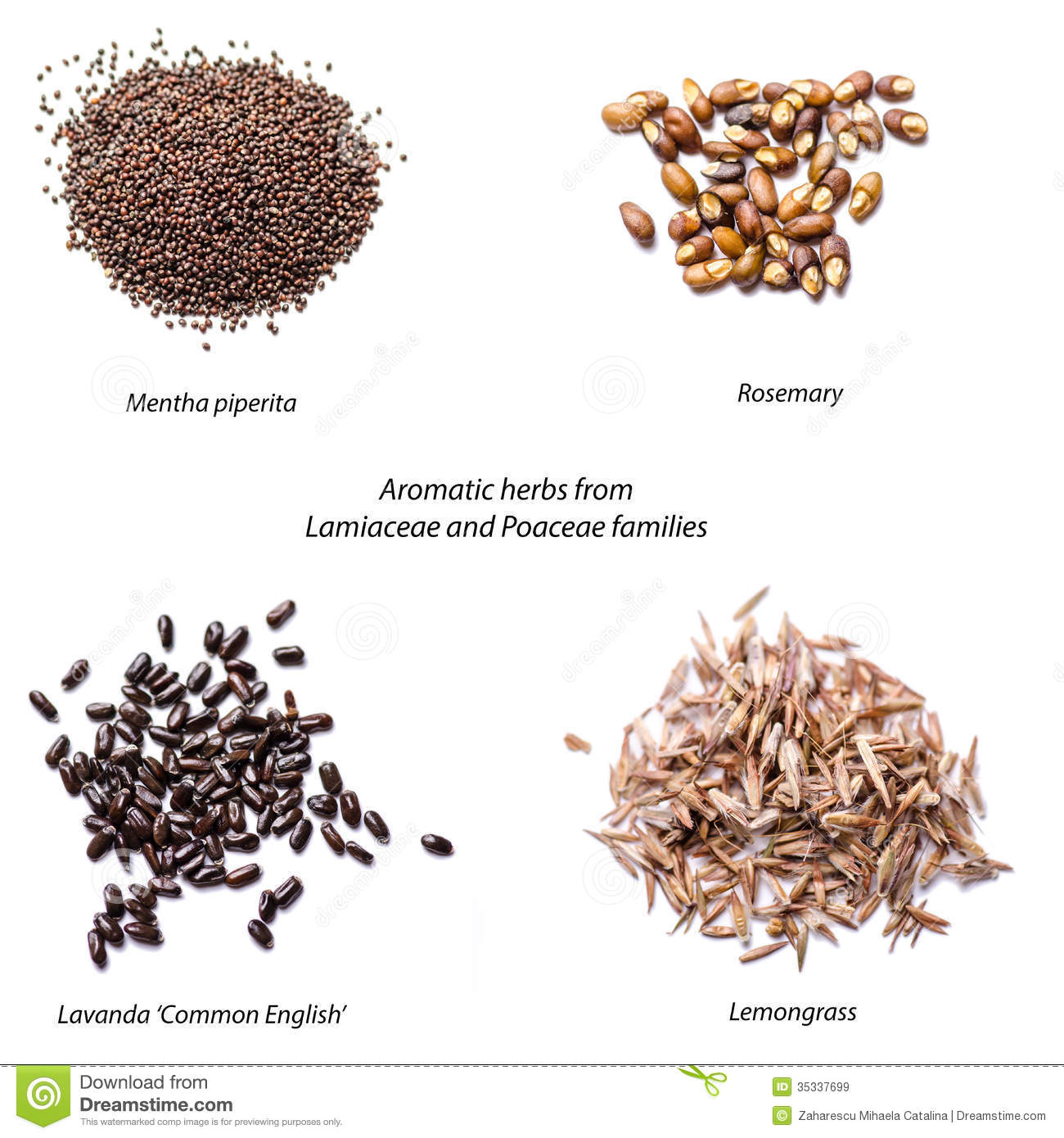 Aromatic Herbs Seeds Royalty Free Stock Images Image