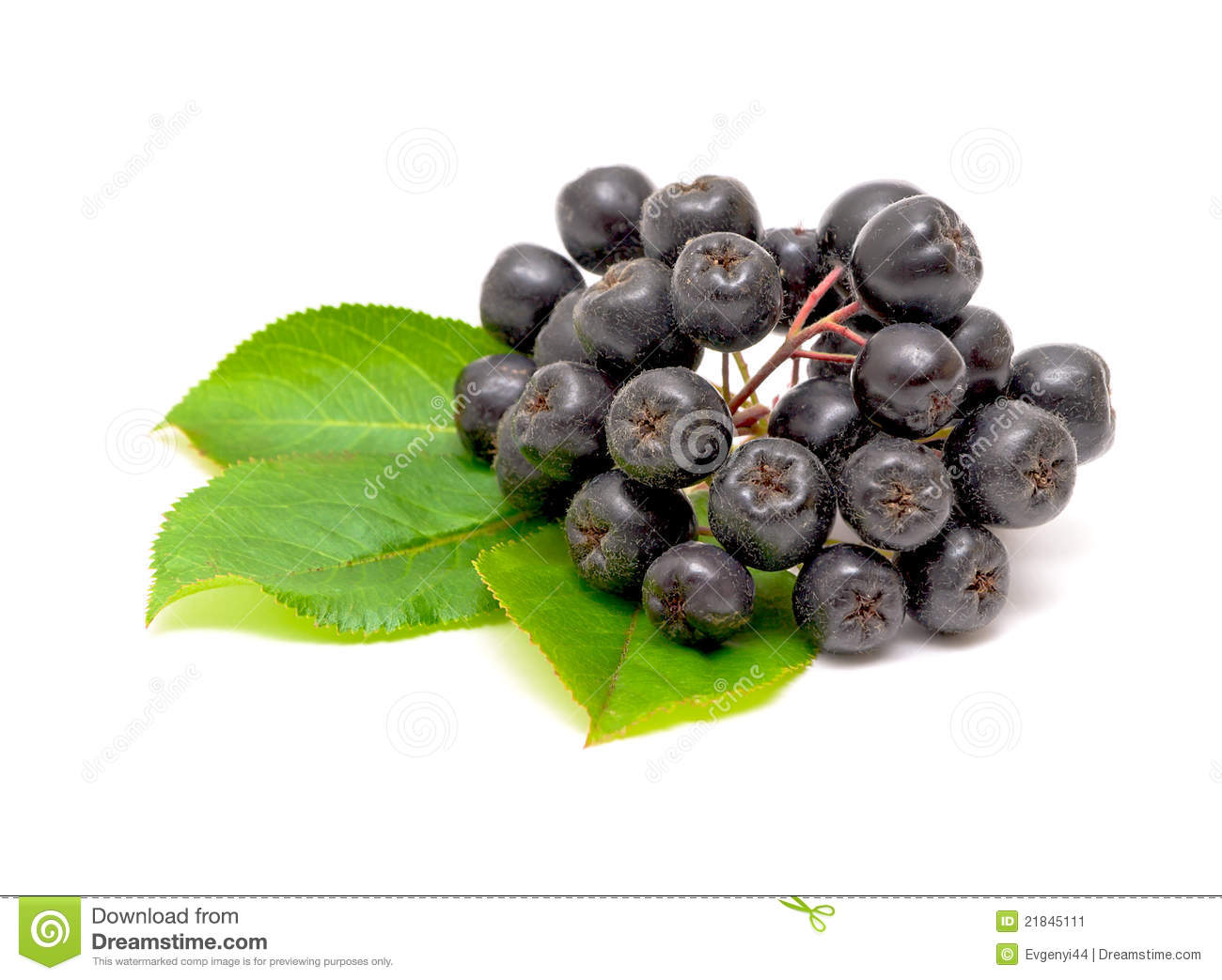 Image result for image of aronia berry