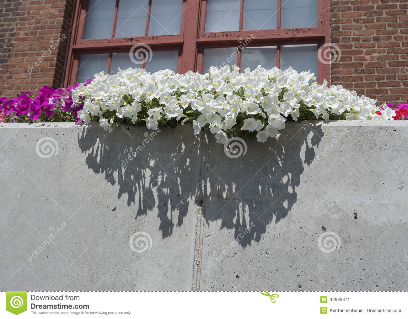 Arrangement floral dehors photo stock image 42993371 for Arrangement floral exterieur