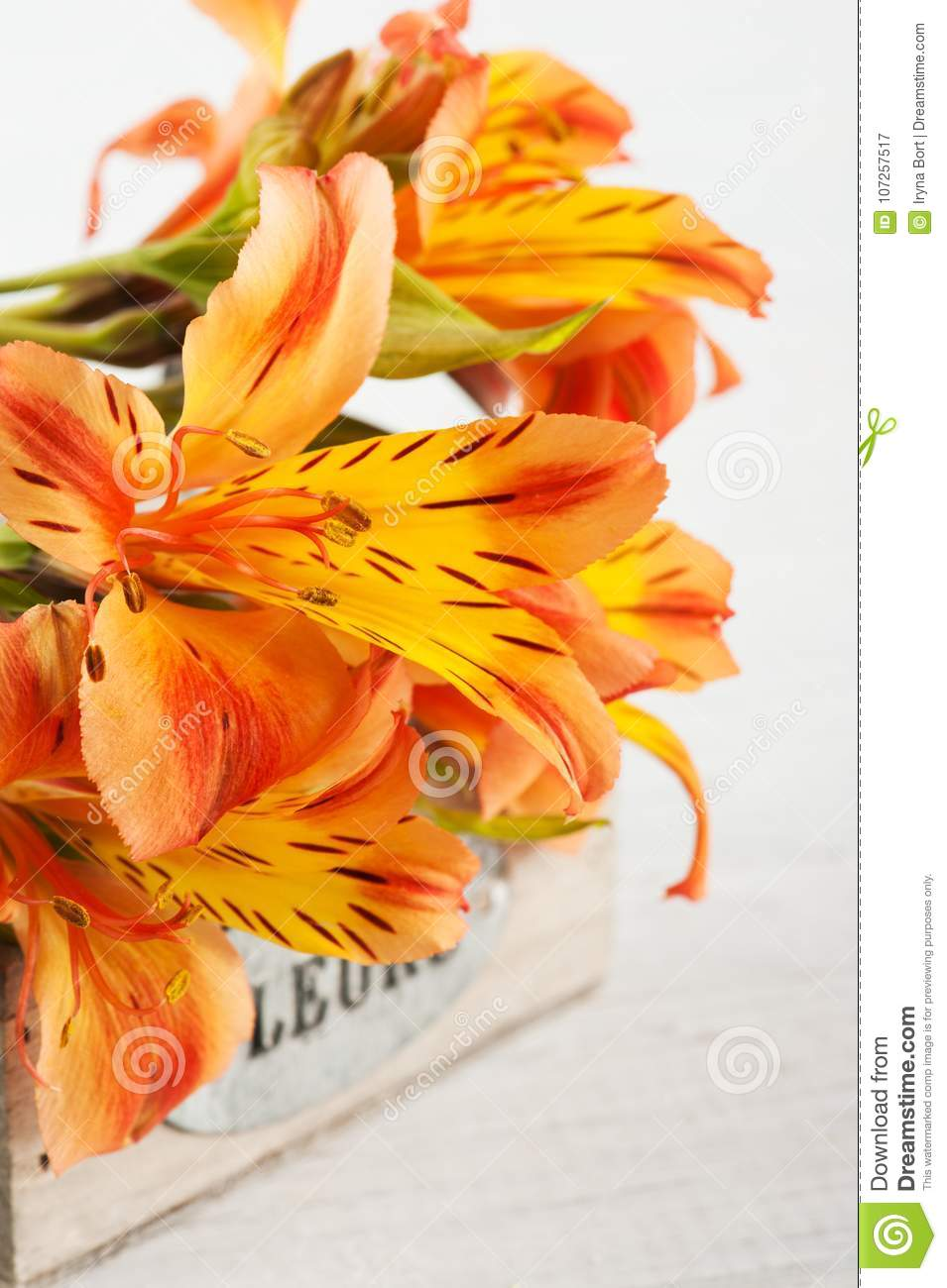 Arrangement of orange lily flowers in wooden box stock image image arrangement of orange lily flowers in wooden box sign flowers in french greeting card for holidays izmirmasajfo