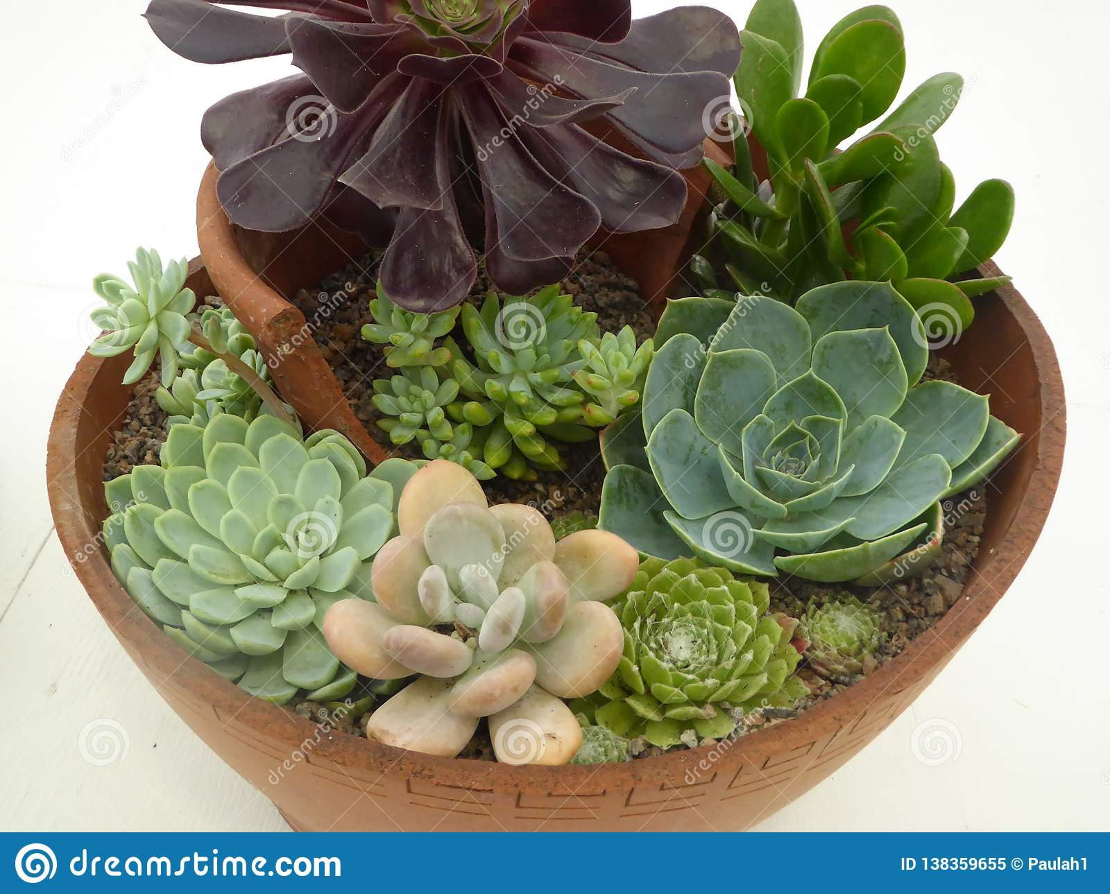 Arrangement Of Red Green And Brown Succulent Plants In Pot Stock