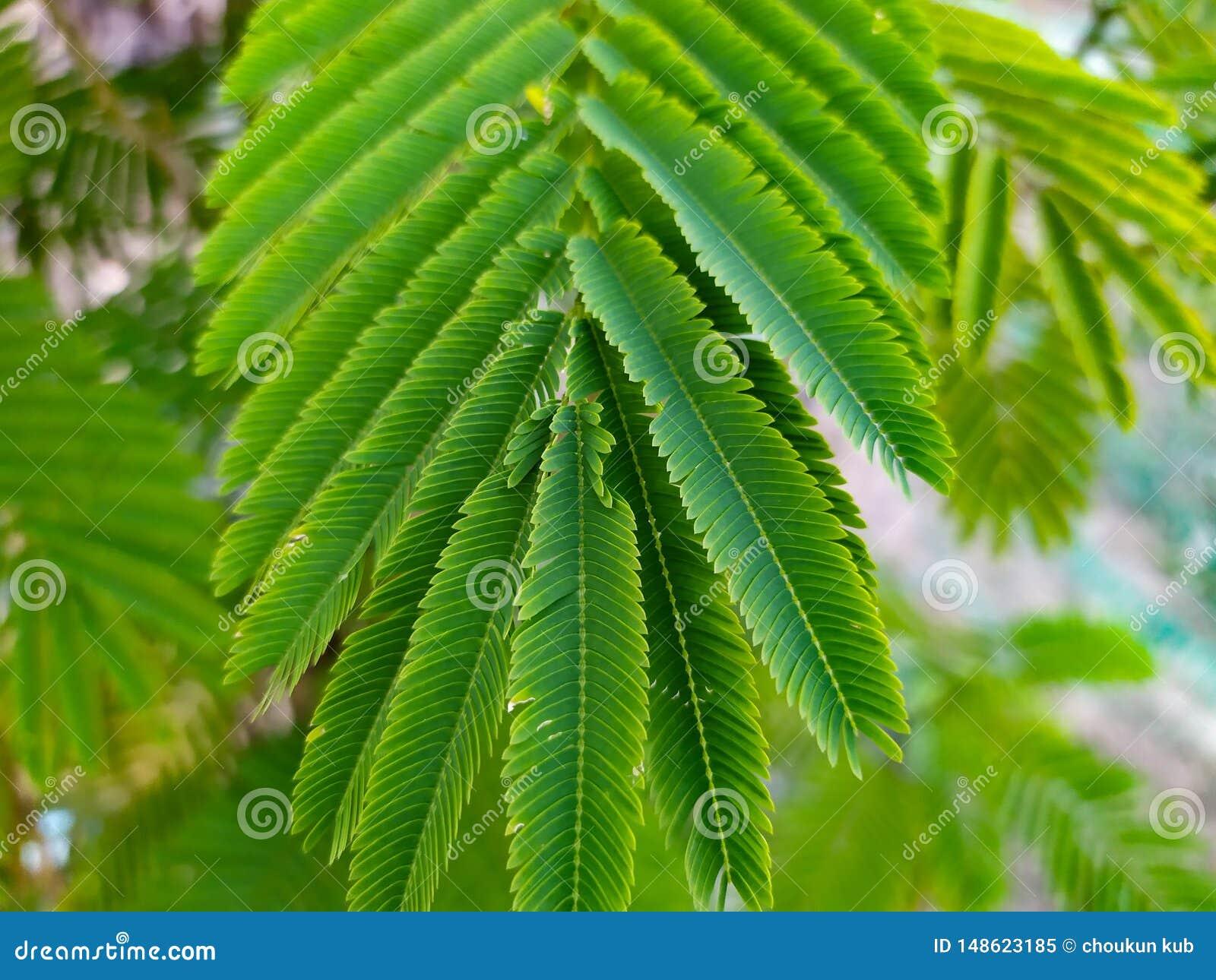 Arranjo bonito do verde no amaranto da folha