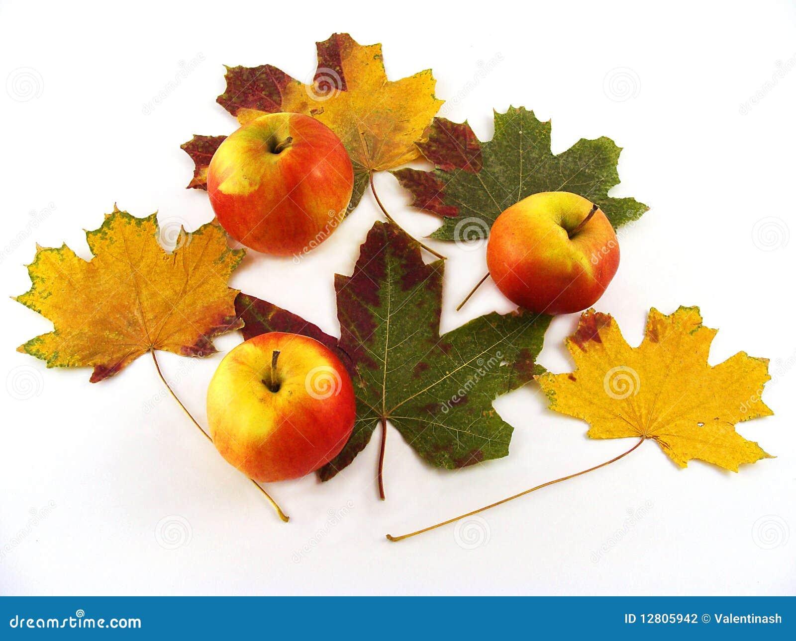 Arranjo do outono