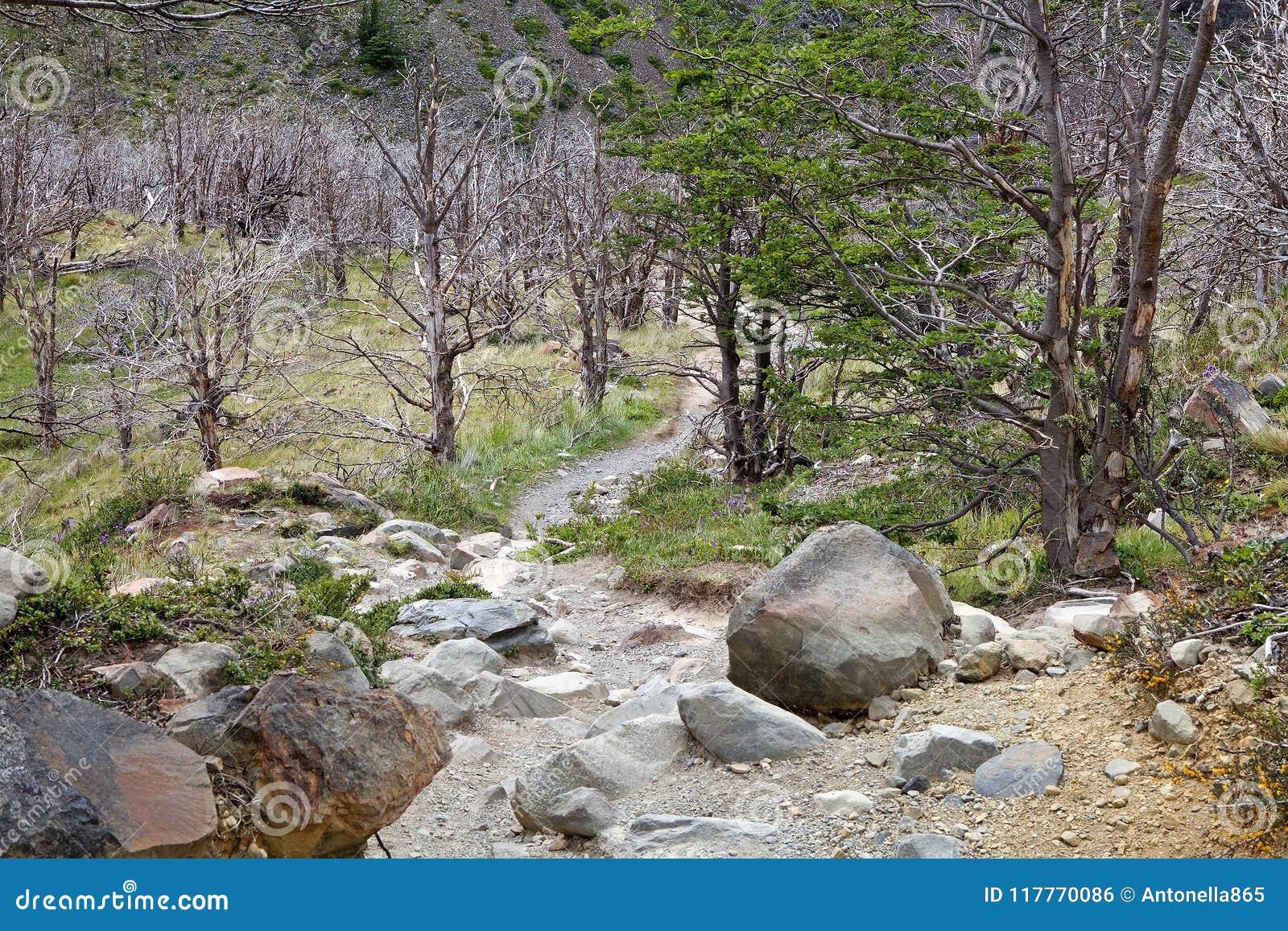 Arraste a Grey Hut no parque nacional de Torres del Paine, região de Magallanes, o Chile do sul