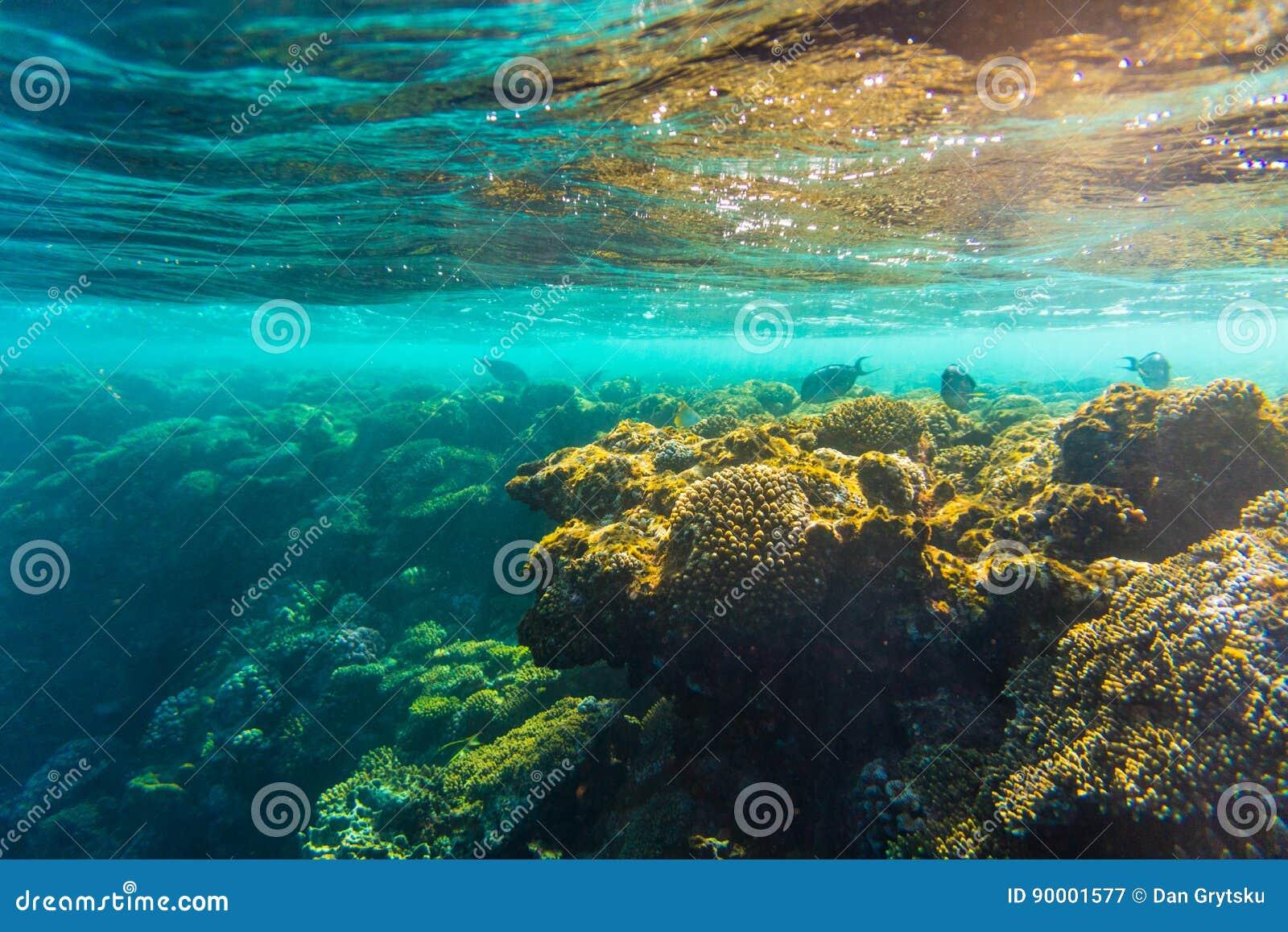 Arrecife de coral con los corales duros, foto subacuática del Mar Rojo de los pescados