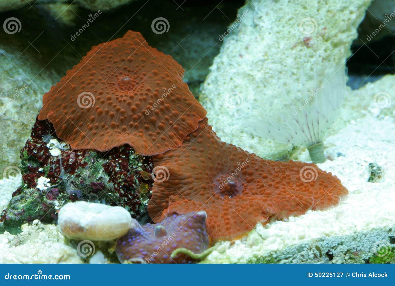 Arrecife de coral del tanque de peces de agua salada