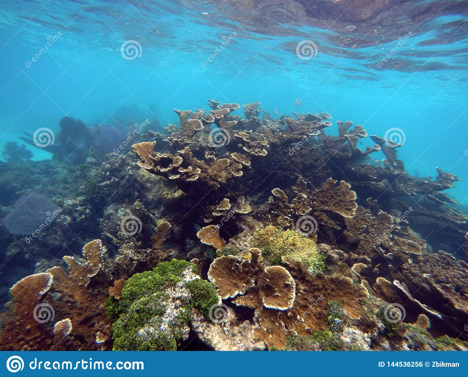 Arrecife de coral subacuático colorido México