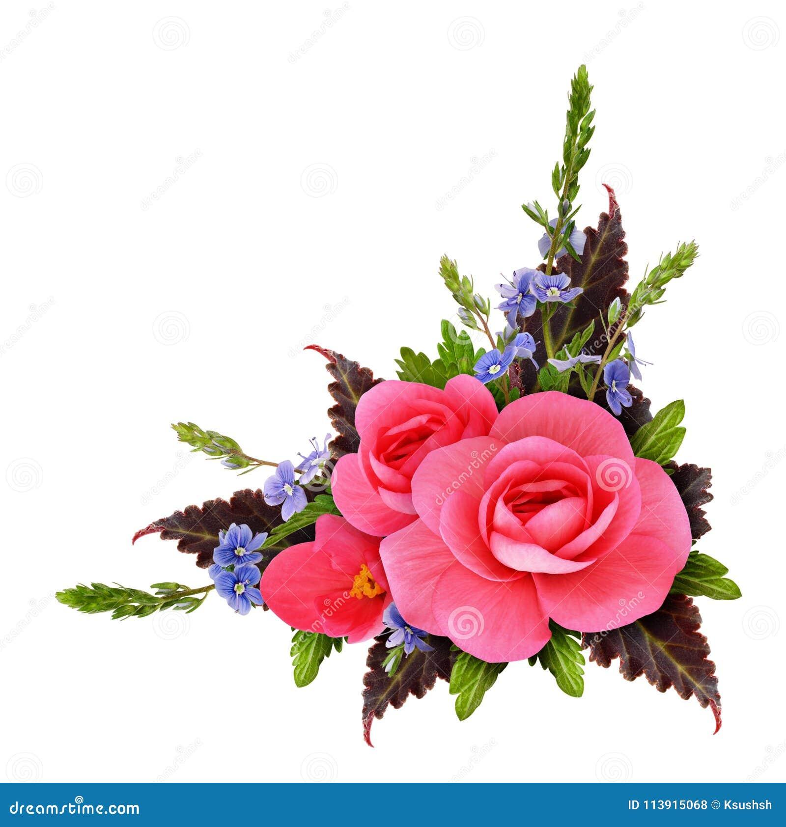 Arreglo De La Esquina Floral Con La Begonia Y Las Pequeñas