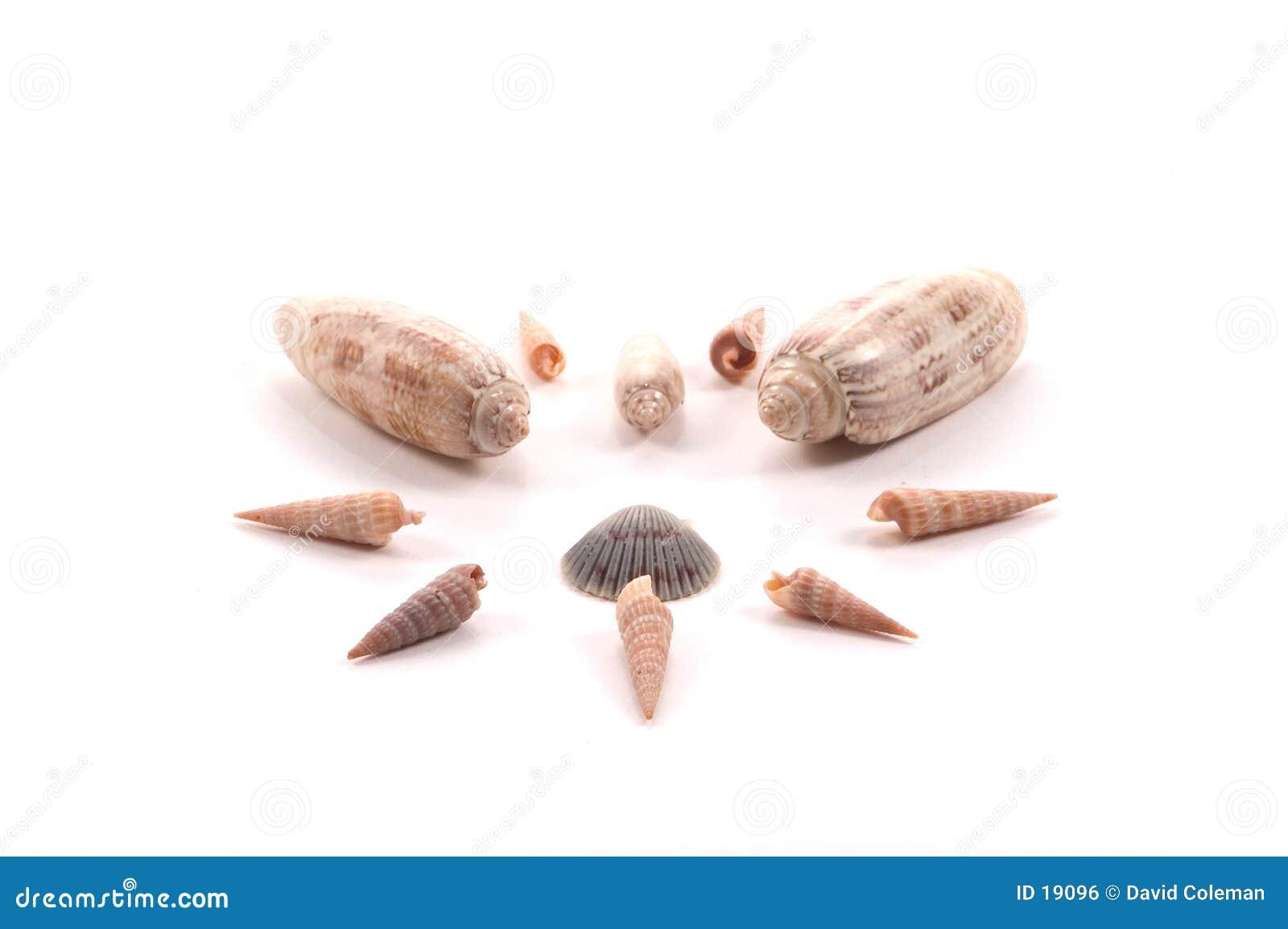 Arreglo del shell