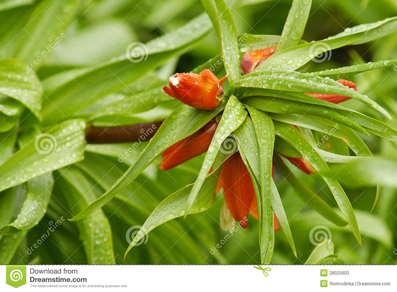 Les plantes vertes plantes grasses photos de for Plantes sur internet