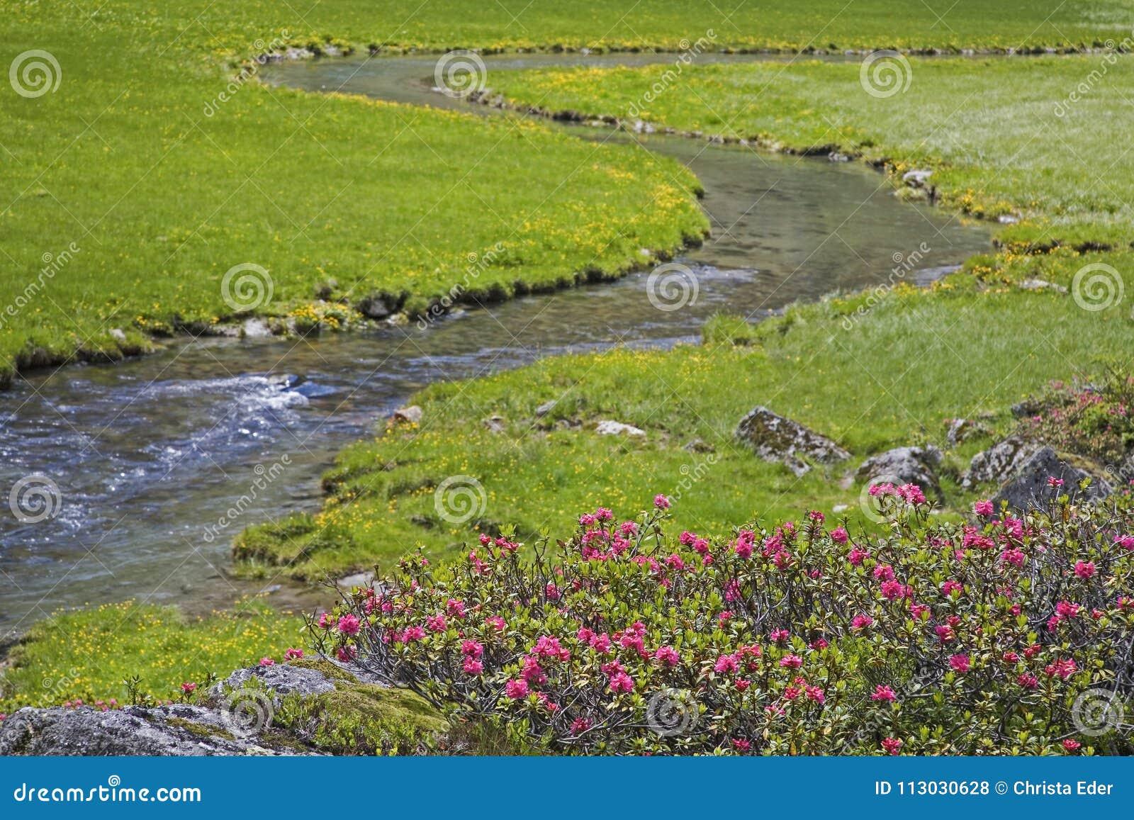 Arroyo idílico del prado en las montañas de Stubai
