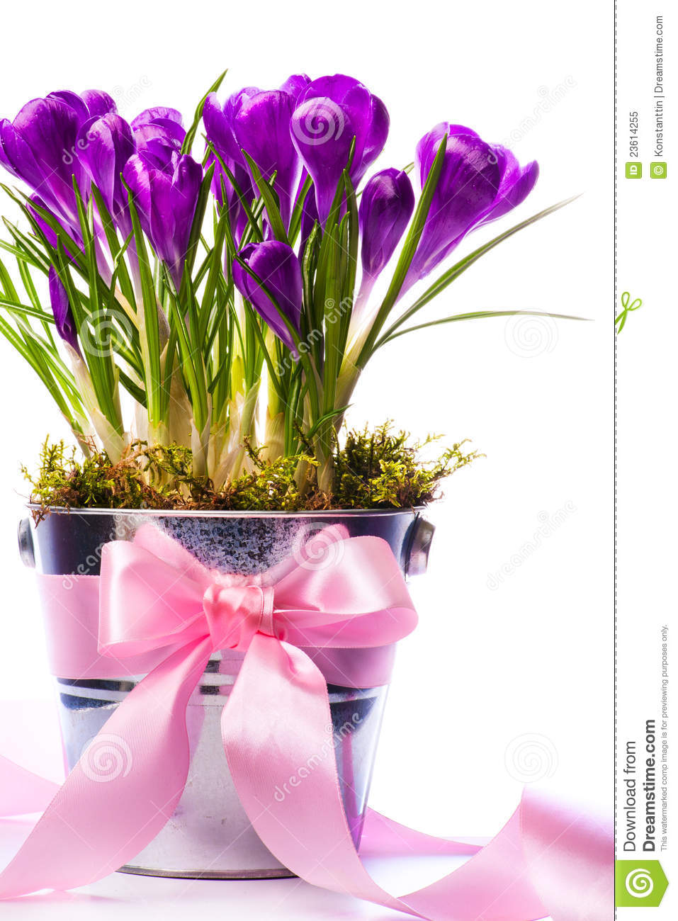 Art beautiful spring flowers royalty free stock photo image