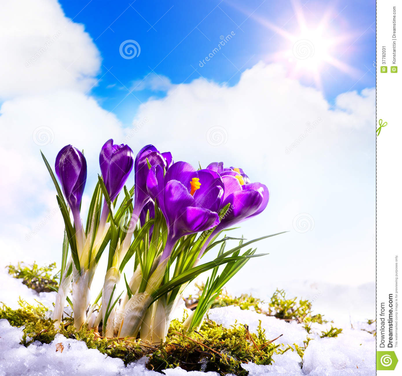 Art Beautiful Spring Flowers Stockbild Bild Von Schonheit