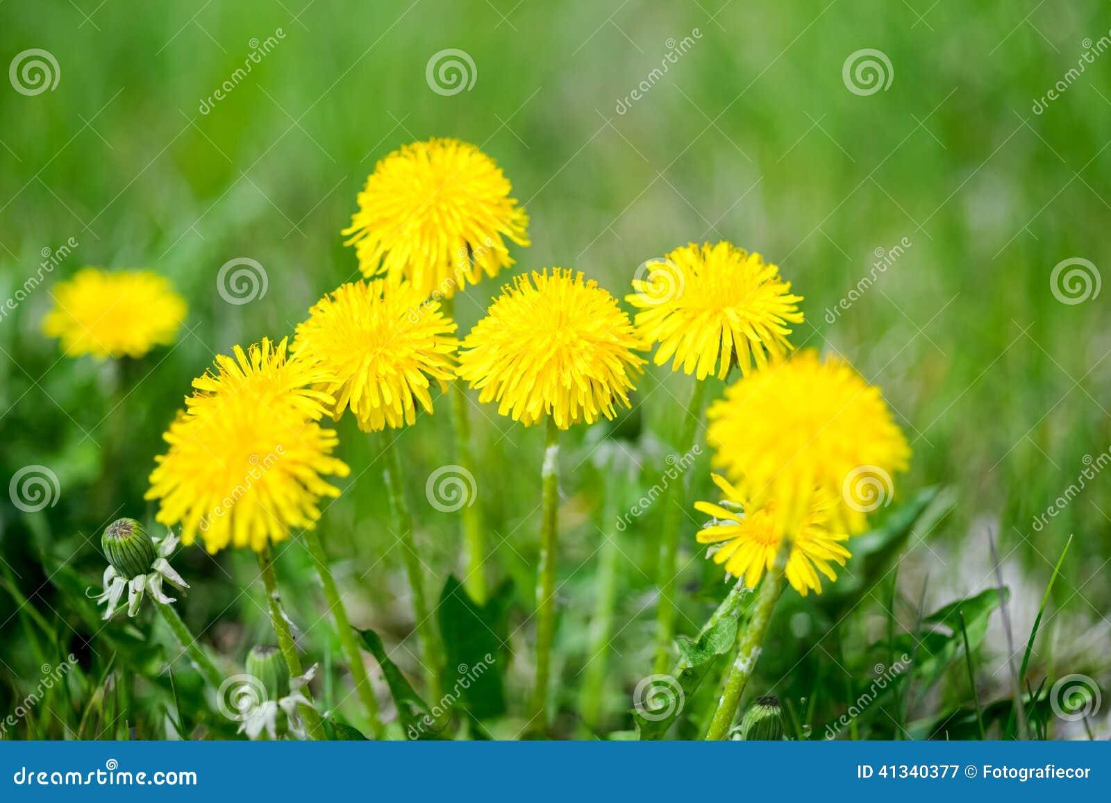 Art Beautiful spring flowers background