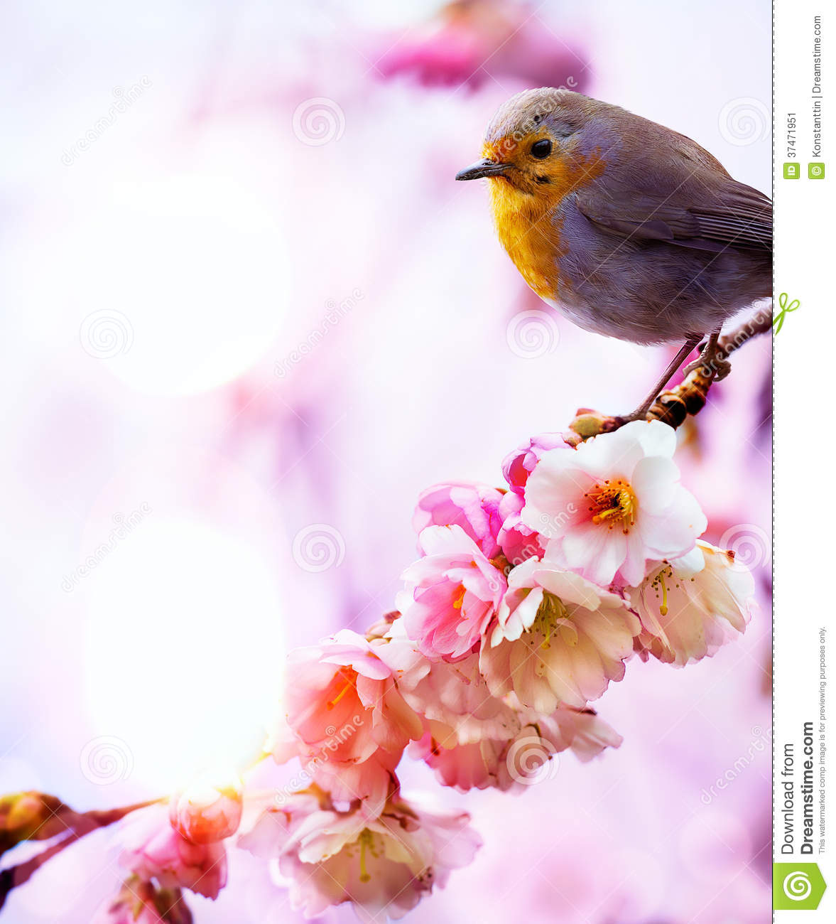 Download Art Beautiful Spring Morning Nature Background Stock Image - Image of robin, blue: 37471951